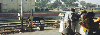 Train station in Gaya, photo taken by Hunter Marston, '07.