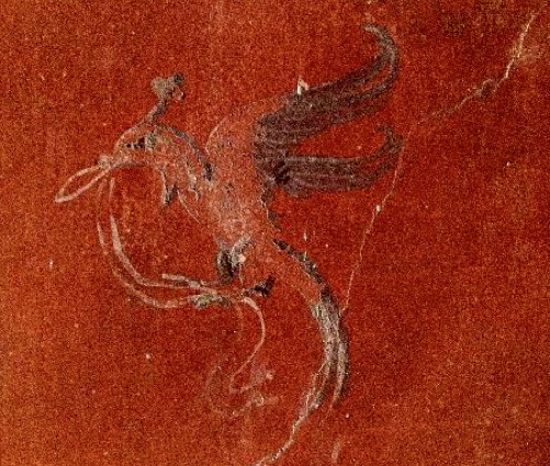 Bird with Swag, Oplontis