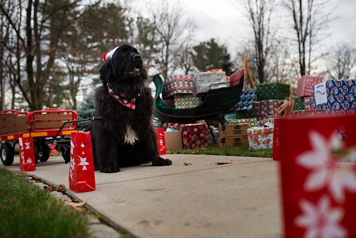 Canine%20power%20helps%20bring%20donations%20to%20the%20Scribner%20House%20lawn.