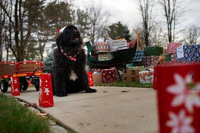 Canine power helps bring donations to the Scribner House lawn.
