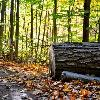 Fall in Northwoods