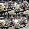 Fearless Skidmore Squirrels