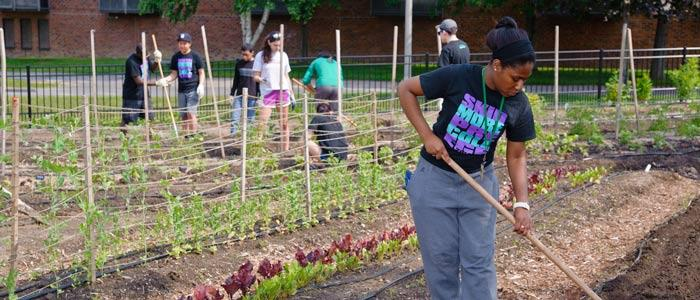 Pre-College students cultivate the Skidmore community garden.