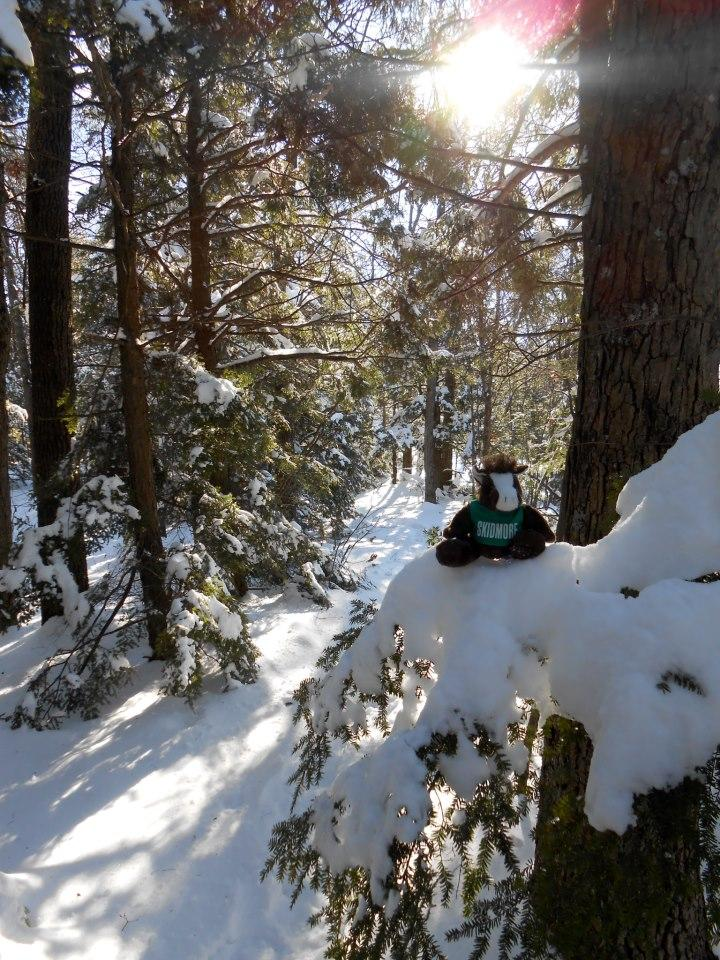 During%20the%20hike%2C%20Skids%20decided%20to%20rest%20in%20a%20Hemlock%20tree.