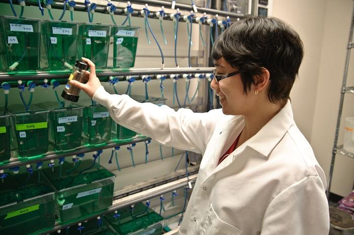 Students in the Comparative Physiology Laboratory employ zebrafish as a model to understand how hormones regulate key physiological functions such as hydromineral balance.