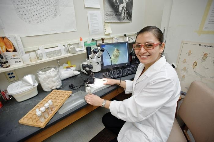 Jan Garcia '15 investigating grooming behavior in intact vs. decapitated transgenic fruit flies.
