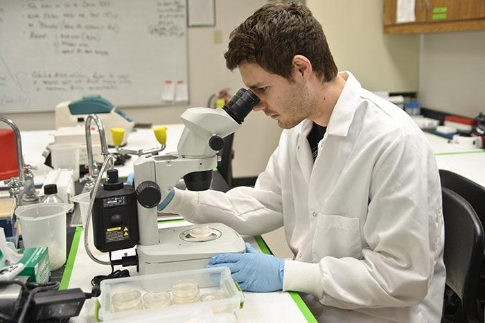Roland Watt '15 examines C. elegans using a stereo microscope.