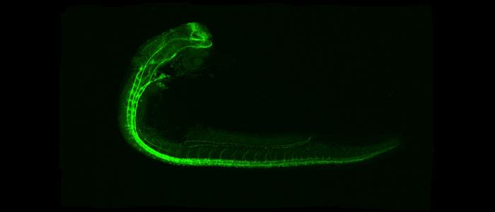 Confocal image