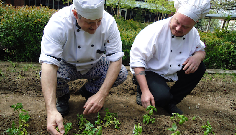 Chefs pick fresh herbs from the nearby herb garden, to be used in dining hall meals.