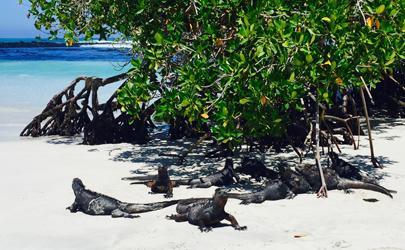 Rafaela Iturralde '18: Fundar Galapagos in Puerto Ayora, Galapagos, Ecuador