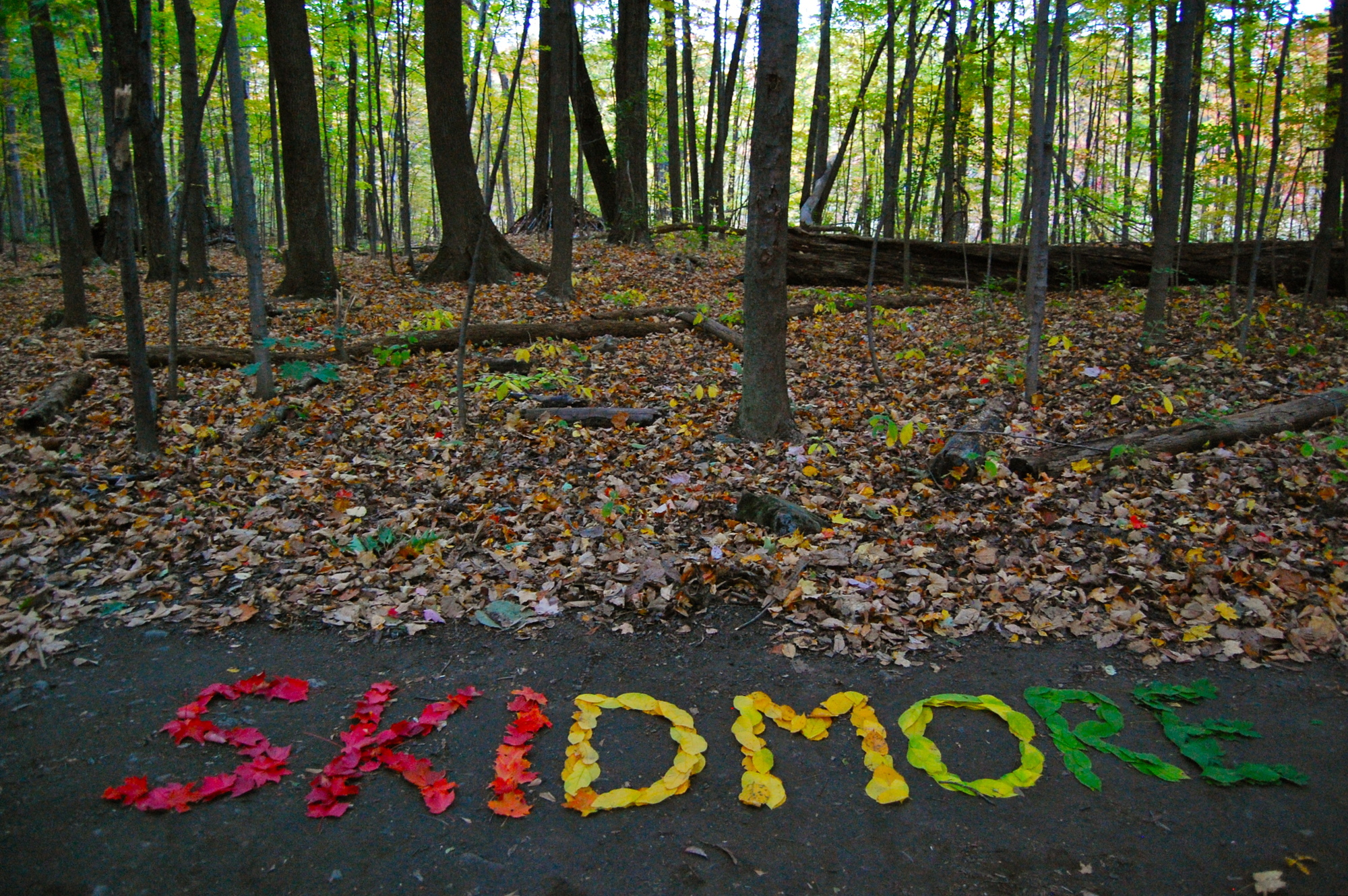 Skidmore leaves by Lauren Bosche '14