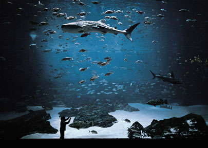 "Kyle Ford, ""The Whale Shark Tank,"" Atlanta, GA, 2008, Archival Inkjet Print"