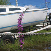 Sailboat in a towing trailer