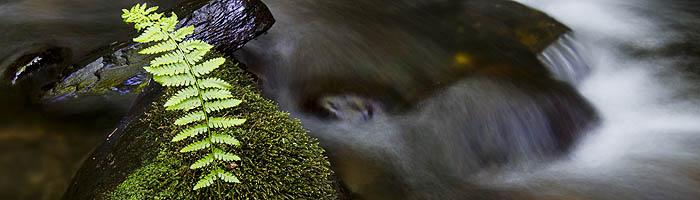 Fern in a water garden