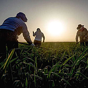 Seeking Sovereignty: Migrant Farmworker Wellbeing in the NY capital region