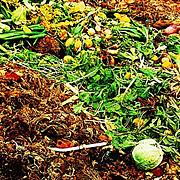 Evolv[ing] Saratoga Springs: Composting Food Waste in Restaurants