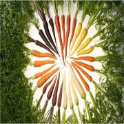 An array of carrots in a wheel-shape